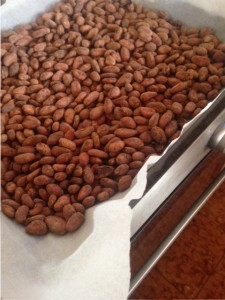 Freshly roasted cacao beans